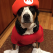 Bella as Super Mario halloween 2015