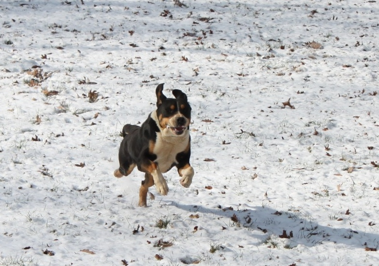 Fernando leaping in the snow