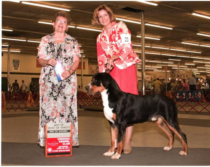 Peter wins Best of Breed at Richmond, Virginia dog show