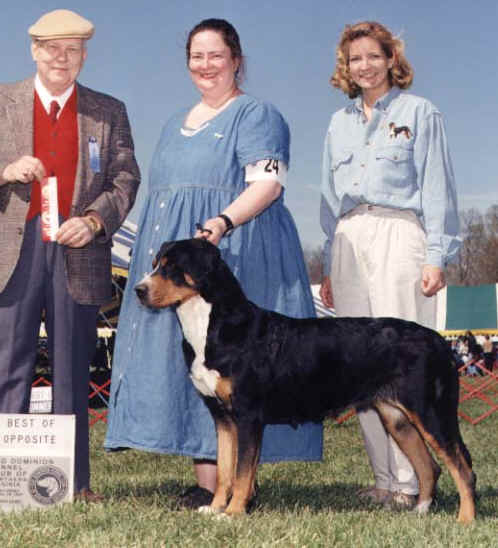 Tye wins at old dominion kennel club show